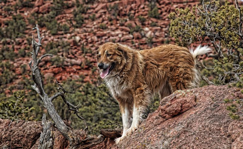 Chaco at Red Canyon