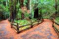 Muir Woods Walking Trails