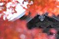 Ninja in the autumn