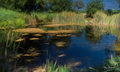 Beckman Winery Pond-