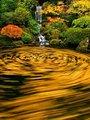 Swirling_Zen_Bliss.jpg