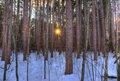 Proud Lk. Sunset -Pines_DSC0030_1_2_tonemapped