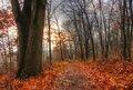 Path_DSC0228_29_30