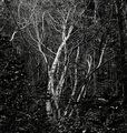 IMG_5895-tanglewood