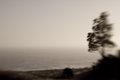 Tree sea