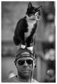 _DSC6813 ray ban cat head.jpg