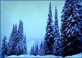 """""""Dark Winter Forest"""""""