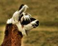 Llama Profiling