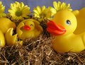 Where We Get Rubber Duckies