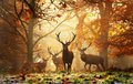 In the Deer's Realm