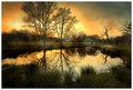 Harsh Richmond Swamp