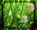 Chives in Green
