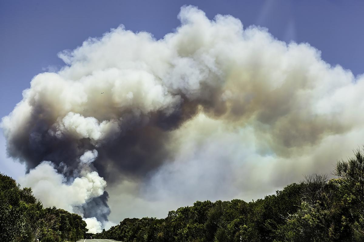 Royal National Park Fire