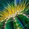 Cactus Thorns - Day 7