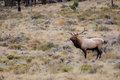 Elk51.jpg