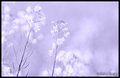 Delicate Flowers_2.jpg