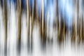 05 - Birches In WInter