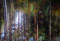 vattenskog