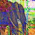 CRW_0731-Edit-Edit.jpg