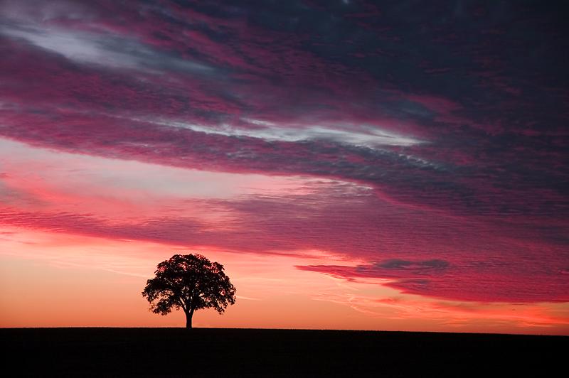 Sunrise-Tree.jpg