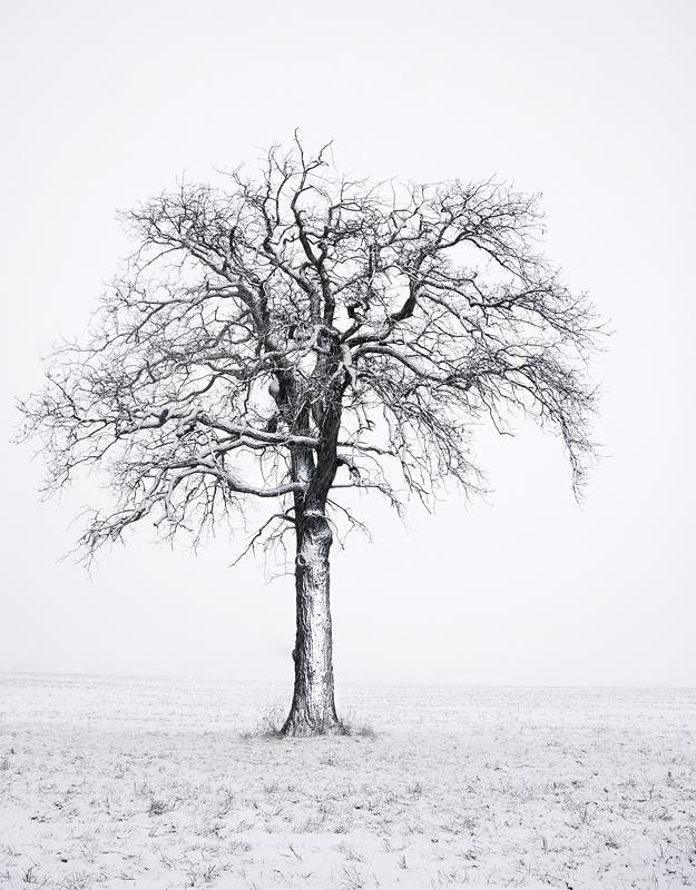 Minimal-Tree-Edited.jpg