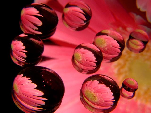 Mirror Drops Pink