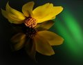 Copyrighted_Image_Reuse_Prohibited_1023814.jpg