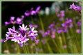 June Flowers-Going for Bokeh