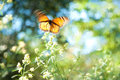 Van Gogh Butterfly