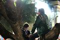 On a tree