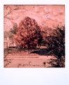 Polaroid SX-70_04