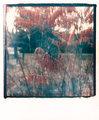 Polaroid SX-70_07b