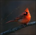 VA State Bird