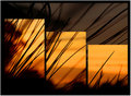 Triptych Sunrise (original)