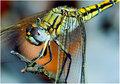 day 26. january 08 where i live. dragonfly