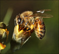 1-sept 09 macro. pollenator