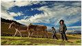 Little Andean Shepherds