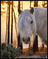 Sunset Pony