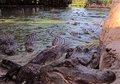 Gator Hole