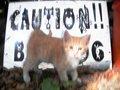 Caution Bad Dog