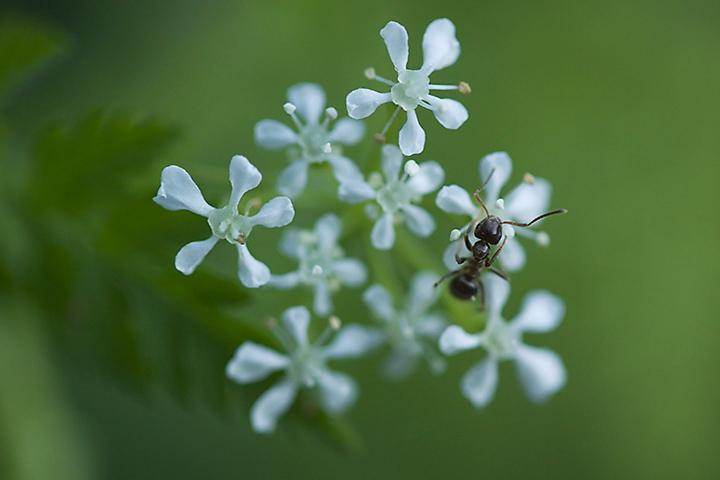 April 21 - Ant