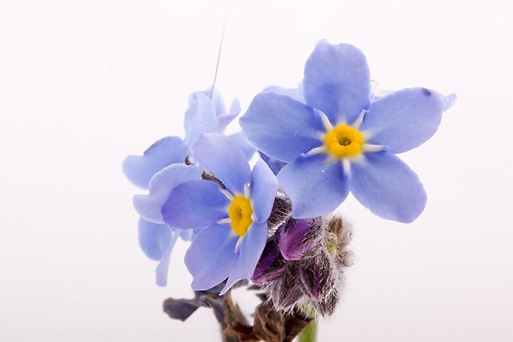 April 23 - Blue weed