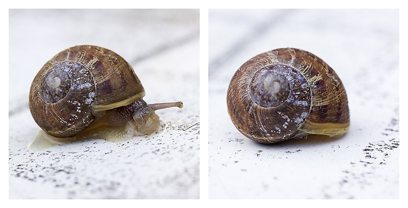 June 22 - Snail