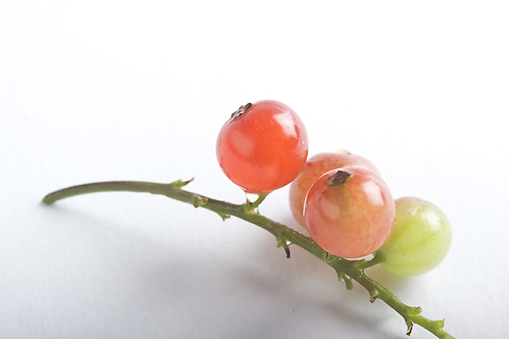 June 28 - Red currants