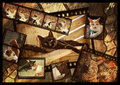 cats on film