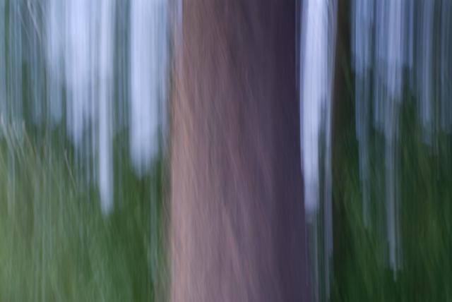 Impression of Douglas Fir tree