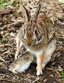 1 - Baby Bunny Feeding