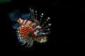 Spiky Fish