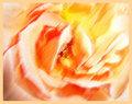 Pastel-Rose-2.jpg