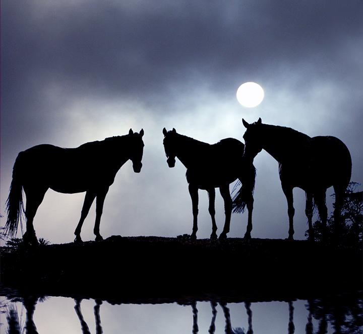 Dark-Horses-2.jpg